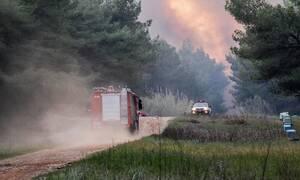 Πυρκαγιά σε δασική έκταση στην περιοχή Μαζαράκι Πηνείας