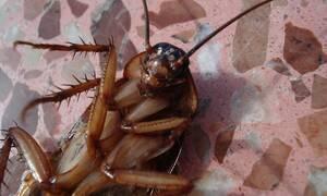 Εφιάλτης: Η είδηση για τις κατσαρίδες σπέρνει τρόμο και πανικό (pics)