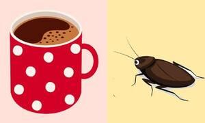 Πώς να απαλλαγείτε από τις κατσαρίδες χρησιμοποιώντας καφέ