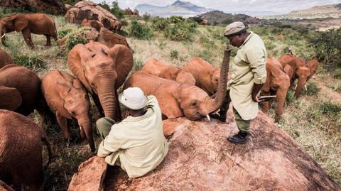 Συγκίνηση: Αυτοί οι άνθρωποι υιοθετούν και σώζουν αδέσποτους ελέφαντες! (pics+vid)