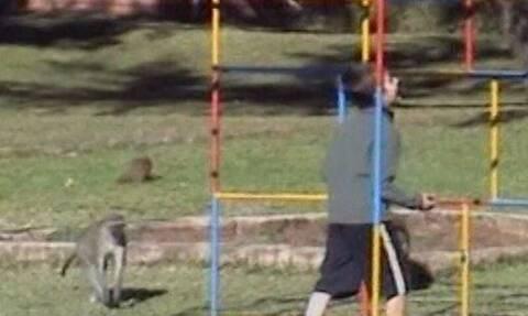 Πιτσιρικάς πίστεψε πως μπορούσε να παίξει με μαΐμούδες! Λίγο αργότερα το μετάνιωσε πικρά (video)