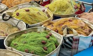 Εύβοια: Έπαθαν ΣΟΚ οι ψαράδες όταν σήκωσαν τα δίχτυα τους (pics)