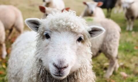 ΕΛΓΑ: Σήμερα (4/7) οι αποζημιώσεις σε αγρότες και κτηνοτρόφους