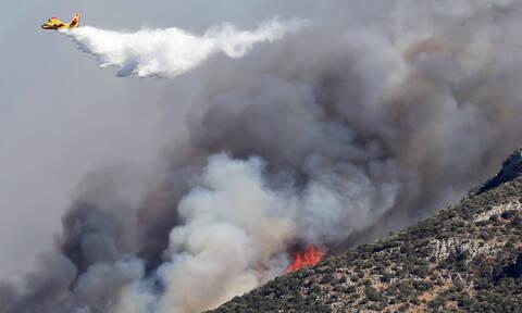 Φωτιά ΤΩΡΑ: Μεγάλη πυρκαγιά μαίνεται στην Εύβοια