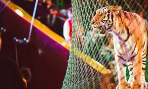 Τραγωδία: Τίγρεις έφαγαν ζωντανό τον εκπαιδευτή τους - Δείτε τι συνέβη