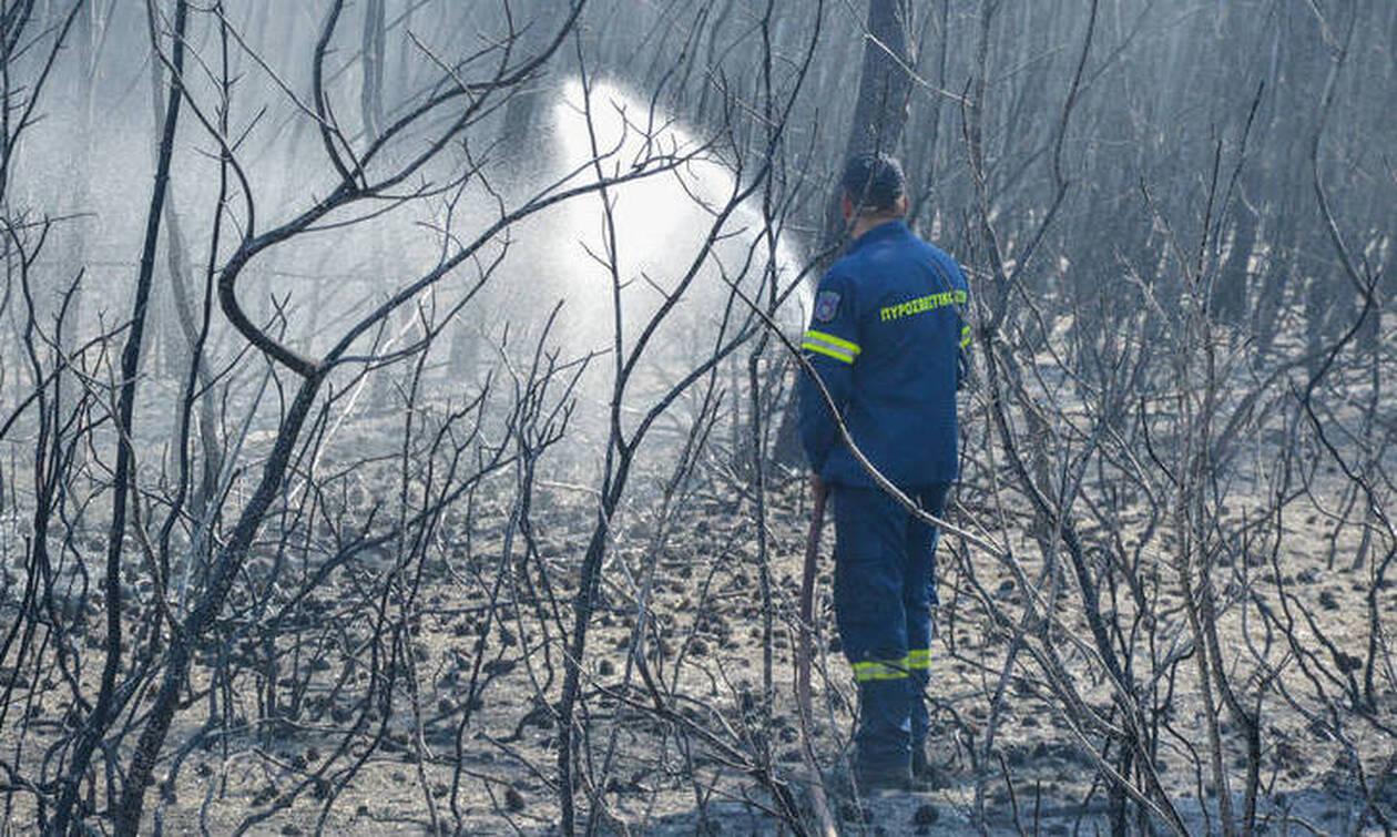 Φωτιά ΤΩΡΑ: Πυρκαγιά σε αγροτοδασική έκταση στην Ηλεία