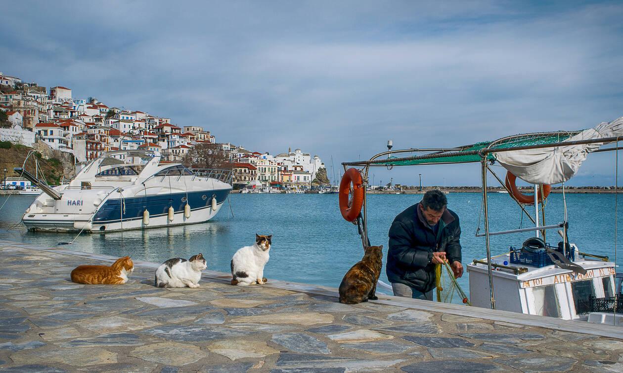 Σκόπελος: Έμειναν άφωνοι με το «τέρας» που είδαν στη θάλασσα! (pics)