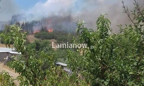 Φωτιά ΤΩΡΑ στη Φθιώτιδα: Σε δασική έκταση ανάμεσα στο Καστρί και την Γραμμένη (pics+vid)