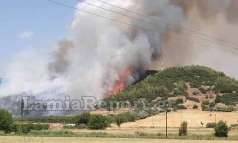 Φωτιά στη Φθιώτιδα: Ενισχύθηκαν οι δυνάμεις της Πυροσβεστικής - Εκκενώθηκαν σπίτια (pics)