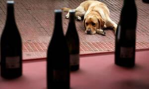 Правительство РФ предложило значительно повысить акциз на вино