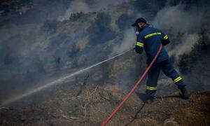 Φωτιά ΤΩΡΑ: Φλέγεται πάλι η Εύβοια - Μεγάλη πυρκαγιά στο Πευκί