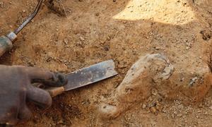 В Греции найдены древнейшие человеческие останки