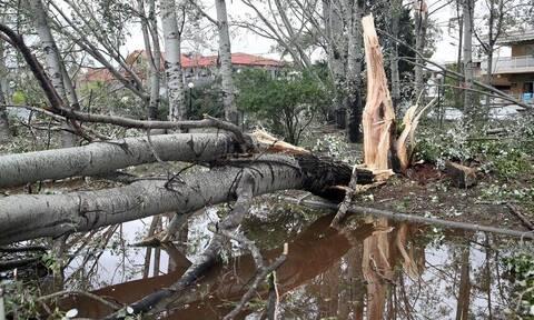 Χαλκιδική - Χαρδαλιάς: Αγώνας δρόμου να αποκατασταθεί η ηλεκτροδότηση το επόμενο 24ωρο
