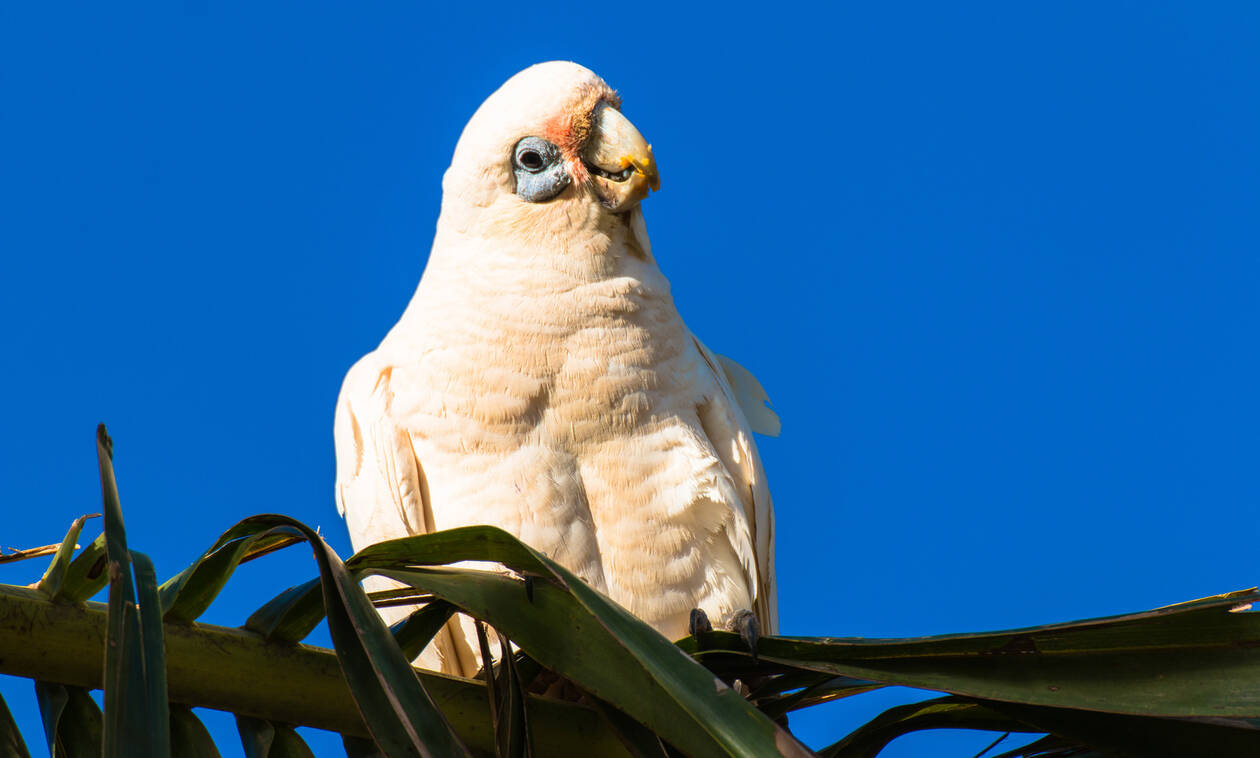 ΣΟΚ: Δεκάδες νεκροί παπαγάλοι - 'Ετρεχε αίμα από τα μάτια τους (Σκληρές εικόνες)