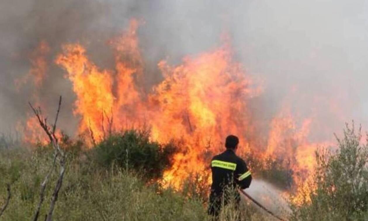 Υπό έλεγχο οι φωτιές στην Εύβοια – Σε επιφυλακή παραμένει η Πυροσβεστική στην Κεφαλονιά