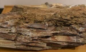 Μυτιλήνη: Συνελήφθη 57χρονος που είχε είχε τμήματα και θραύσματα από το απολιθωμένο δάσος