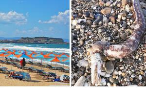Ρέθυμνο: Περπατούσε αμέριμνος στην παραλία μέχρι που είδε μπροστά του μια… σμέρνα!