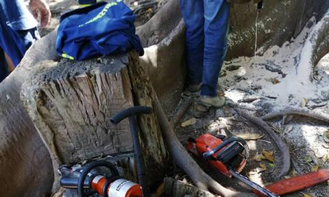 Αγωνία για αγοράκι στην Κρήτη: Σφήνωσε σε δέντρο - Τεράστια επιχείρηση της πυροσβεστικής