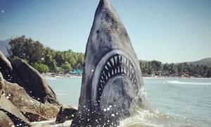 Οπτική ψευδαίσθηση ή πραγματικότητα; Επίθεση καρχαρία σε παραλία; (pics)