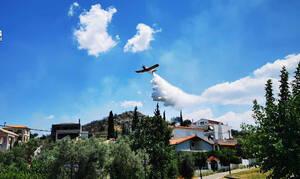 Φωτιά ΤΩΡΑ: Μεγάλη πυρκαγιά στο Ναύπλιο - Είναι κοντά σε κατοικημένη περιοχή (pics)