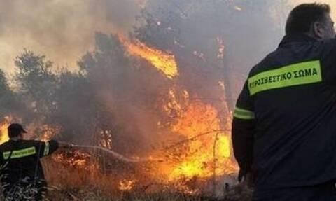 Φωτιά ΤΩΡΑ: Πύρινη κόλαση στη Θάσο - Απειλείται κατοικημένη περιοχή