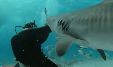 Αυτός ο άνθρωπος ΘΕΛΕΙ να τον δαγκώνουν καρχαρίες - Δείτε γιατί (vid)