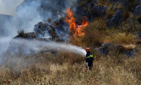 Φωτιά ΤΩΡΑ: Σε ύφεση η πυρκαγιά στον Κιθαιρώνα - Νέα πύρινα μέτωπα σε Μυτιλήνη και Ιωάννινα