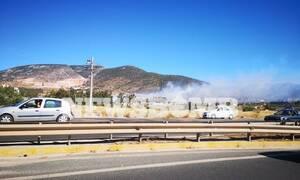 Φωτιά ΤΩΡΑ: Μεγάλη πυρκαγιά στο Μαρκόπουλο – Υπό μερικό έλεγχο στα Μέγαρα  (pics)