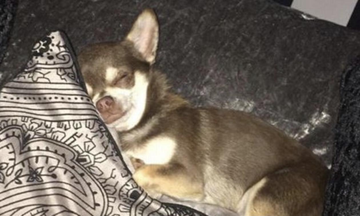 Έπαθε ΣΟΚ όταν ανακάλυψε ποιος έκλεψε τον σκύλο της