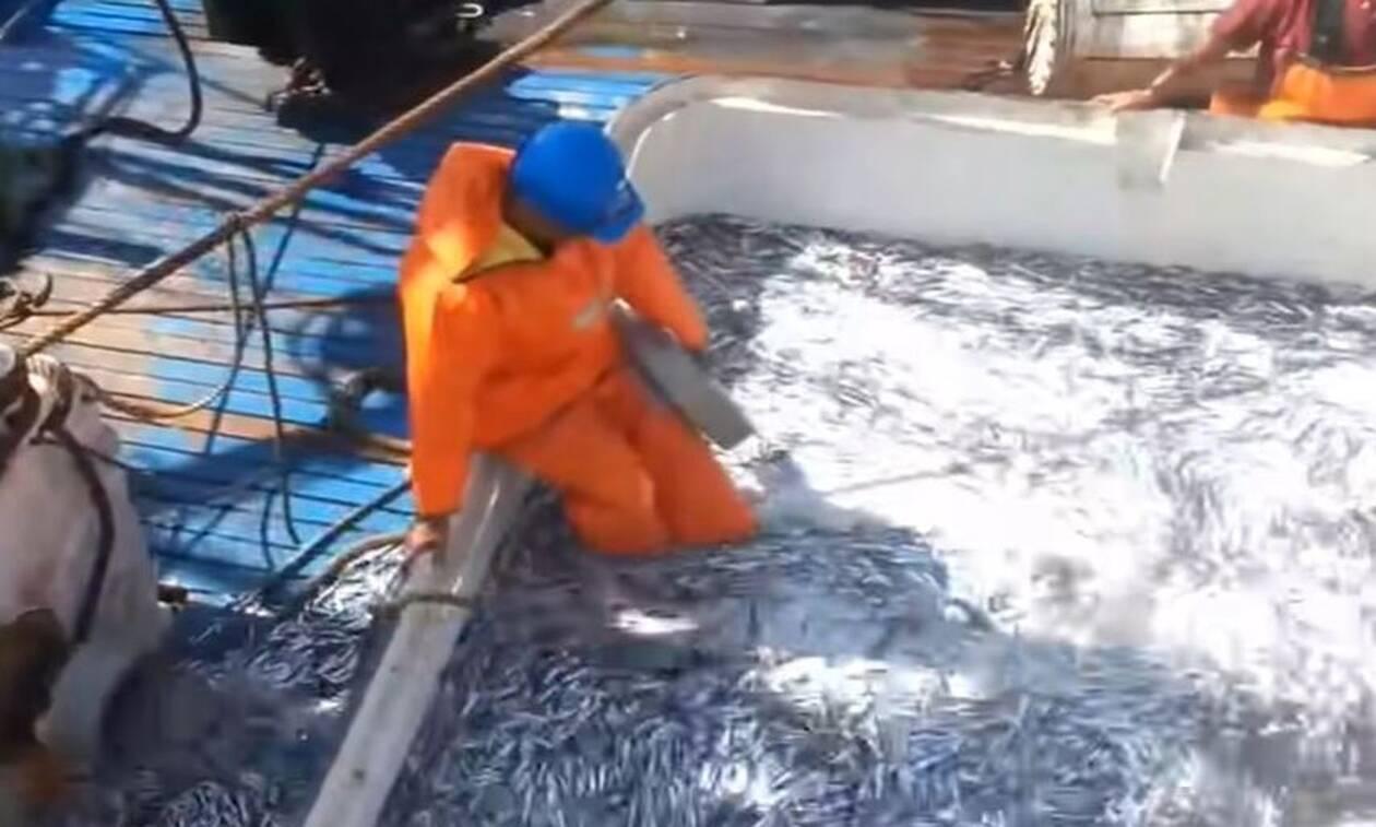 Σήκωσαν τα δίχτυα τους και έπαθαν σοκ! Δεν έχετε ξαναδεί τέτοια ψαριά... (Video)