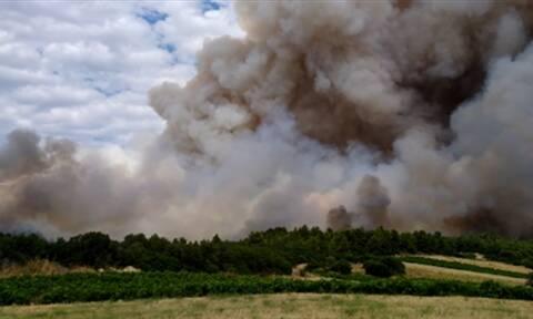 Φωτιά ΤΩΡΑ: Όλες οι δυνάμεις στην Τανάγρα – Μάχη να μη φτάσουν οι φλόγες στο δάσος των Δερβενοχωρίων