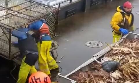 Εριξαν τις κλούβες στη θάλασσα για καβούρια! Δείτε τι βγάζουν και πώς τα επεξεργάζονται (video)