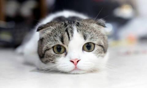 Υπάρχει λόγος που γουργουρίζουν οι γάτες και δεν είναι αυτός που νομίζεις (pics+vid)
