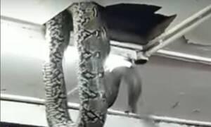 Πανικός: Έπεσε φίδι από την οροφή στα κεφάλια των βουλευτών! (pics)