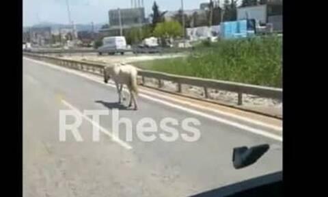 Συναγερμός στη Θεσσαλονίκη: Άλογο κόβει... βόλτες στους δρόμους (vid)