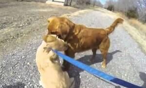 Σκυλίτσα συναντάει τη μαμά της μετά από 3 μήνες - Η αντίδρασή τους ΔΕΝ υπάρχει