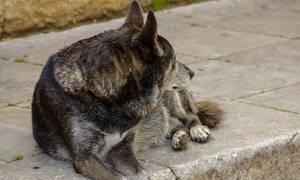 Πτολεμαΐδα: Αγέλη σκύλων επιτέθηκε σε 3,5 ετών παιδί και στη μητέρα του
