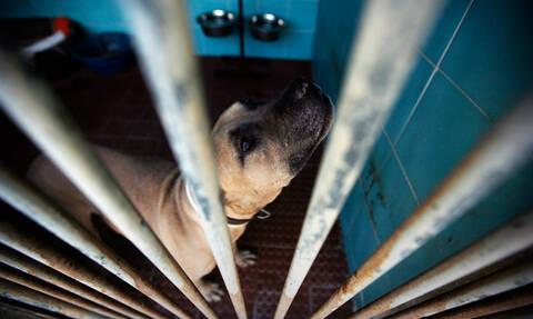Думе предложили перенести дату, с которой передача бездомных животных в приюты будет обязательной