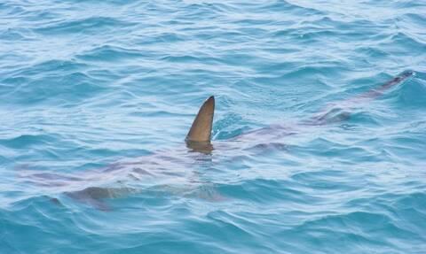 Ο φόβος και ο τρόμος των θαλασσών «κρύβεται» στα ρηχά (pics)
