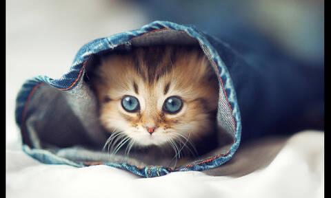 Σε ποια ονόματα ακούν οι γάτες;
