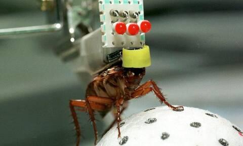 Αυτή η «κατσαρίδα» είναι άτρωτη (vid)