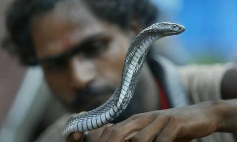 Φρίκη: Τον δάγκωσε φίδι και πήρε αμέσως εκδίκηση – Δείτε τι έκανε (vid)