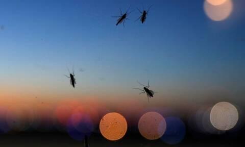 Ιός του Δυτικού Νείλου: Καταγράφηκαν οι πρώτοι θάνατοι – Μέτρα προφύλαξης από τα κουνούπια