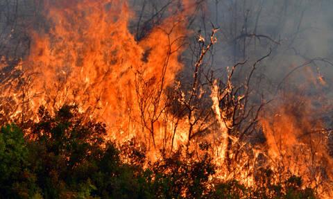 Φωτιά στην Αρχαία Νεμέα απείλησε κατοικίες (pics)