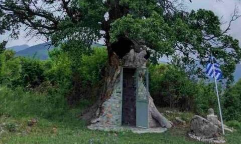 Δέος: Το εκκλησάκι του Αγίου Παϊσίου είναι χτισμένο μέσα σε δέντρο - Μαγικές εικόνες