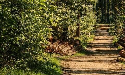 Δασικοί χάρτες: Nέα παράταση - Δείτε σε ποιες περιοχές