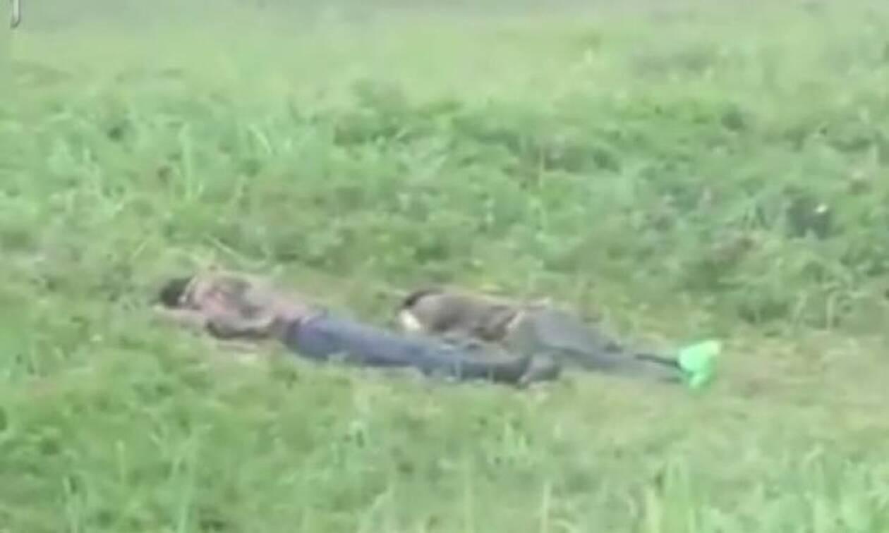 Τους πήρε ο ύπνος στο δάσος - Έπαθαν σοκ μόλις είδαν τι τους ξύπνησε (vid)