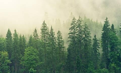 Επιδότηση έως 100% για δράσεις προστασίας των δασικών εκτάσεων
