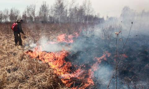 Власти уличили в искажении данных о лесных пожарах в России