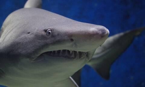 Βίντεο - ΣΟΚ: Καρχαρίας δαγκώνει ψαρά πάνω σε σκάφος